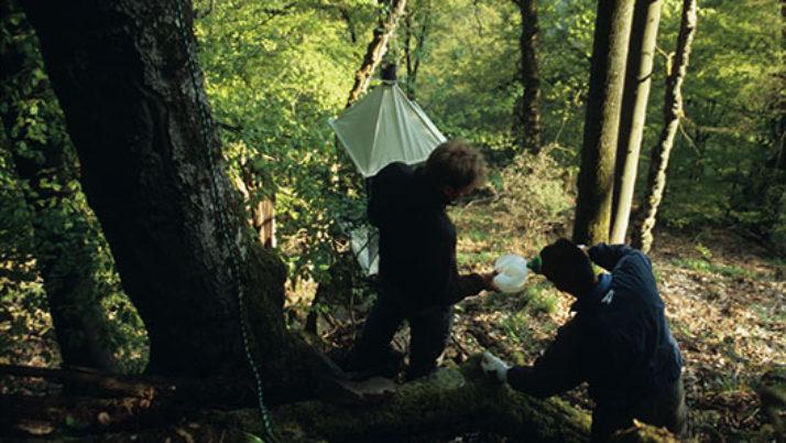 Baumklettern für Wissenschaft und Naturschutz