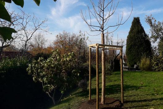 Baumpflanzungen