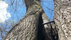 Baumkontrolle & Baumgutachten