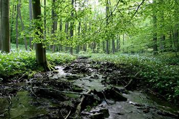 Forst- & Naturschutz-dienstleistungen