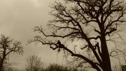 Baumklettern für Wissen-schaft und Naturschutz
